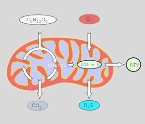 sejt felépítése