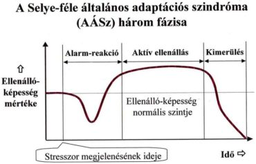 Stressz fázisok