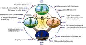 sejt Biológiai óra